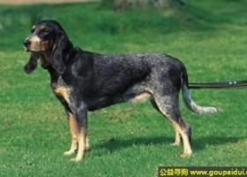 小瑞士猎犬 - 可靠、友好、个性随和