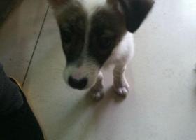 北省石家庄理工职业学院捡到一只狗,谁丢的
