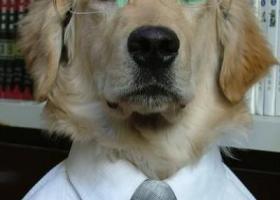 本狗博士要召开学术演讲会了,穿正式点好拍照