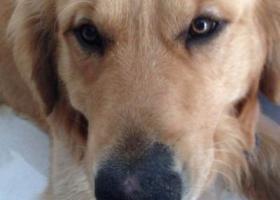 寻狗启示,苏盐城市建湖县捡到一只狗,它是一只非常可爱的宠物狗狗,希望它早日回家,不要变成流浪狗。