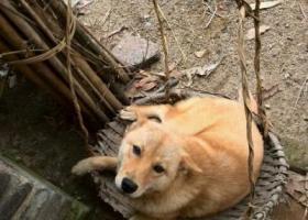 寻狗启示,东省电白区沙琅镇丢失爱狗,它是一只非常可爱的宠物狗狗,希望它早日回家,不要变成流浪狗。