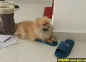 寻狗启示,林省白城市通榆县运动会场丢失爱狗,它是一只非常可爱的宠物狗狗,希望它早日回家,不要变成流浪狗。