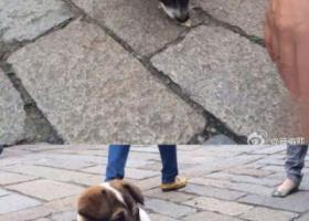寻狗启示,苏省无锡市滨湖区惠山直街惠山先锋书店那边有只走丢的狗狗,它是一只非常可爱的宠物狗狗,希望它早日回家,不要变成流浪狗。