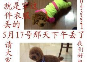 寻狗启示,徽省池州市贵池区秋浦西路丢失一只名叫西红柿的狗狗,它是一只非常可爱的宠物狗狗,希望它早日回家,不要变成流浪狗。