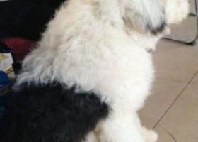 寻狗启示,东省烟台市莱阳盛隆街和玉带路丢失一只名叫大宝白色古墓,它是一只非常可爱的宠物狗狗,希望它早日回家,不要变成流浪狗。