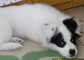 东省济宁邹城市丢失一只四个月大的白色公狗