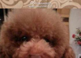 川省成都市成华区李家沱泰兴路附近走失一只名叫小豆丁3岁母狗