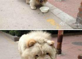 京市丰台区方庄紫方园一区附近有只流浪狗