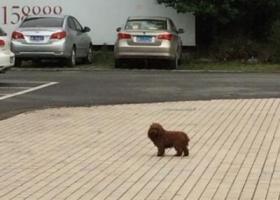 寻狗启示,江省宁波市鄞州区它山堰路明州医院附近发现一只流浪狗,它是一只非常可爱的宠物狗狗,希望它早日回家,不要变成流浪狗。