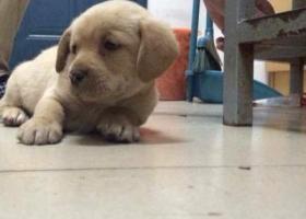 寻狗启示,徽省马鞍山市河海大学文天学院寻狗,它是一只非常可爱的宠物狗狗,希望它早日回家,不要变成流浪狗。