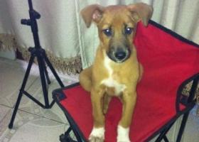 寻狗启示,川省遂宁市蓬溪县寻狗,它是一只非常可爱的宠物狗狗,希望它早日回家,不要变成流浪狗。