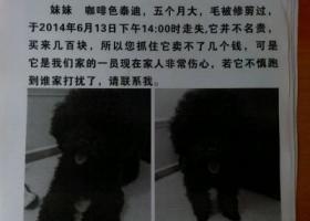 寻狗启示,江省湖州市吴兴区寻狗红丰西村丢失五个月大咖啡色泰迪,它是一只非常可爱的宠物狗狗,希望它早日回家,不要变成流浪狗。
