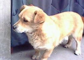 寻狗启示,西省运城市寻狗名叫豆豆,它是一只非常可爱的宠物狗狗,希望它早日回家,不要变成流浪狗。