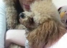 寻狗启示,东省泰安市 在市政府广场被抱走说是向西去了 名叫妞妞 母犬,它是一只非常可爱的宠物狗狗,希望它早日回家,不要变成流浪狗。