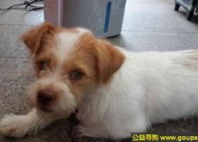 东省深圳市宝安区寻狗兴东地铁站丢失一只狗狗黄白相间母狗