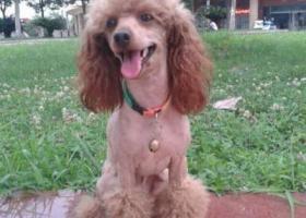 寻狗启示,西省汉中市汉台区寻狗南关正街风景路附近走失名叫乖乖,它是一只非常可爱的宠物狗狗,希望它早日回家,不要变成流浪狗。
