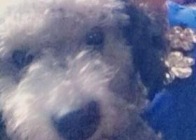 寻狗启示,建省南平市建瓯市寻狗名叫lucky,它是一只非常可爱的宠物狗狗,希望它早日回家,不要变成流浪狗。