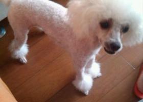 寻狗启示,西省汉中市城固县寻狗,它是一只非常可爱的宠物狗狗,希望它早日回家,不要变成流浪狗。