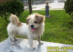 寻狗启示,家庄钻石广场看到一只流浪的狗狗,它是一只非常可爱的宠物狗狗,希望它早日回家,不要变成流浪狗。