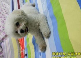 寻狗启示,东省威海市环翠区庙耩路花园中路附近丢失名叫羊羊,它是一只非常可爱的宠物狗狗,希望它早日回家,不要变成流浪狗。