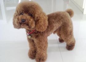 寻狗启示,重金悬赏!寻找爱犬!,它是一只非常可爱的宠物狗狗,希望它早日回家,不要变成流浪狗。
