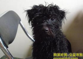 寻狗启示,江霞山开发区寻狗,它是一只非常可爱的宠物狗狗,希望它早日回家,不要变成流浪狗。