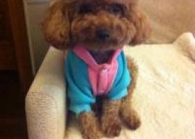 寻狗启示,江省绍兴诸暨市璜山镇下市村丢失名叫coco,它是一只非常可爱的宠物狗狗,希望它早日回家,不要变成流浪狗。