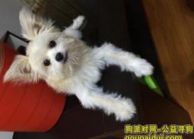 寻狗(北京房山区长龙苑南区附近丢失)
