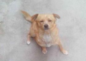 寻狗启示,台市芝罘区黄务街道办事处西里 丢失处港城西大街 丢失名小黄,它是一只非常可爱的宠物狗狗,希望它早日回家,不要变成流浪狗。