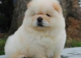 泰迪幼犬吃什么狗粮
