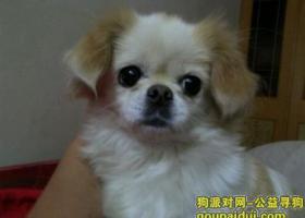 沈阳寻狗 狗在牡丹江小区电业所附近走失,看到的朋友们请跟我联系[/url]