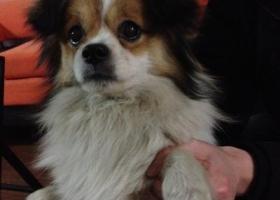 寻主人!2015年2月8日北京昌平回龙观和谐家园2区西门捡到狗狗