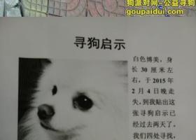 寻狗启示,北京市顺义区石园北区走失白色博美
