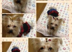 寻狗启示,安徽省绩溪县北村新屋下,它是一只非常可爱的宠物狗狗,希望它早日回家,不要变成流浪狗。