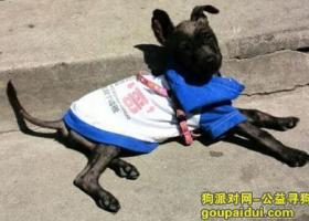 北京朝阳区东城区急寻黑色狗狗,就像一只黑色流浪狗,酬谢5000元