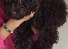 寻狗启示,淄博寻爱狗,求大家帮扩散,它是一只非常可爱的宠物狗狗,希望它早日回家,不要变成流浪狗。