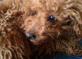 寻狗启示,浙江长兴县在欧尚超市附近捡到的,它是一只非常可爱的宠物狗狗,希望它早日回家,不要变成流浪狗。