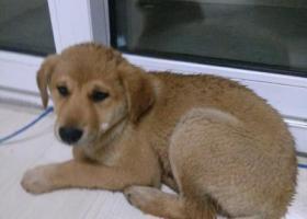 寻狗启示,江苏南通捡到狗(苏通科技产业园),它是一只非常可爱的宠物狗狗,希望它早日回家,不要变成流浪狗。