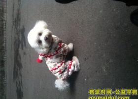 2015年3月18日晚20:30在锦江区莲花南路遗失3岁母比熊