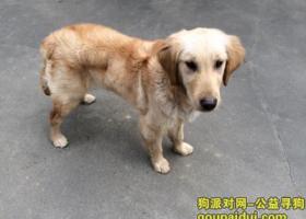 寻狗启示,镇江市丹徒区上党镇急需寻找生病的爱狗,它是一只非常可爱的宠物狗狗,希望它早日回家,不要变成流浪狗。