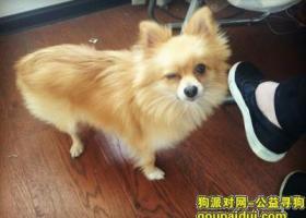 寻狗启示,湖北省潜江市园林青广场丢失金黄色、脖子上红色铃铛的小狗,它是一只非常可爱的宠物狗狗,希望它早日回家,不要变成流浪狗。
