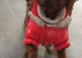 寻狗启示,寻狗启示,酬金2000,它是一只非常可爱的宠物狗狗,希望它早日回家,不要变成流浪狗。