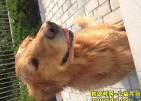 寻狗启示,【安徽淮北寻狗启示】四月二十日于长山公园丢失金毛犬一只,它是一只非常可爱的宠物狗狗,希望它早日回家,不要变成流浪狗。