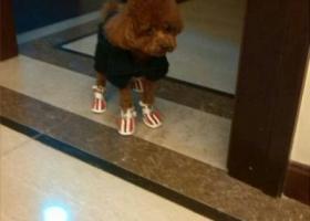 北京顺义区马坡寻狗启示