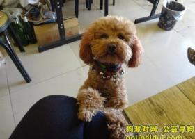 寻狗启示,河南寻狗,呼唤皮皮回家!,它是一只非常可爱的宠物狗狗,希望它早日回家,不要变成流浪狗。