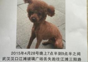 武汉汉口江滩 4月28号 晚上玻璃广场丢失三阳路方向 看到重金酬谢决不食言 2000电话 15827333553