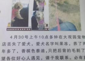 寻狗启示,山东枣庄找狗狗 找到重赏!!求扩散谢谢!,它是一只非常可爱的宠物狗狗,希望它早日回家,不要变成流浪狗。