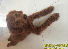 寻找爱犬!深圳龙岗区横岗