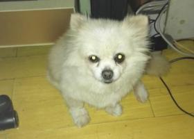 我家小狗贝贝5月3日在保俶路与王家弄路口被一位过路女士领走
