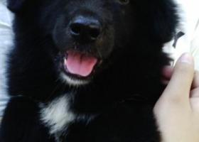寻狗启示,我家狗狗中午不见了,希望各位好心人帮帮我!谢谢!,它是一只非常可爱的宠物狗狗,希望它早日回家,不要变成流浪狗。